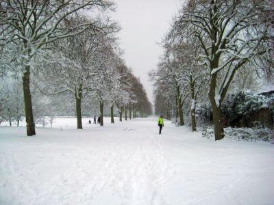 Ham Avenues (1) Feb 2009