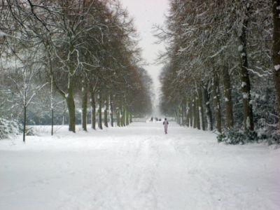 Ham Avenues (2) Feb 2009