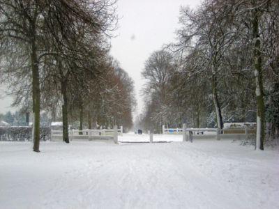 Ham Avenues (3) Feb 2009