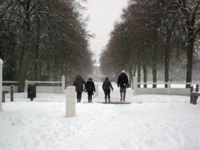 Ham Avenues (4) Feb 2009