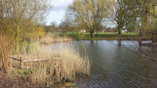 Ham Common Pond April 2015