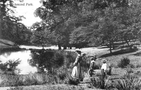 Ham Cross Pond Richmond Park 1910